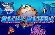 Чокнутые Воды: азарт на деньги